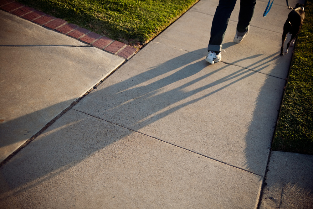 Ellingsen Photography Summer Evening Family Dog Walk Shadows