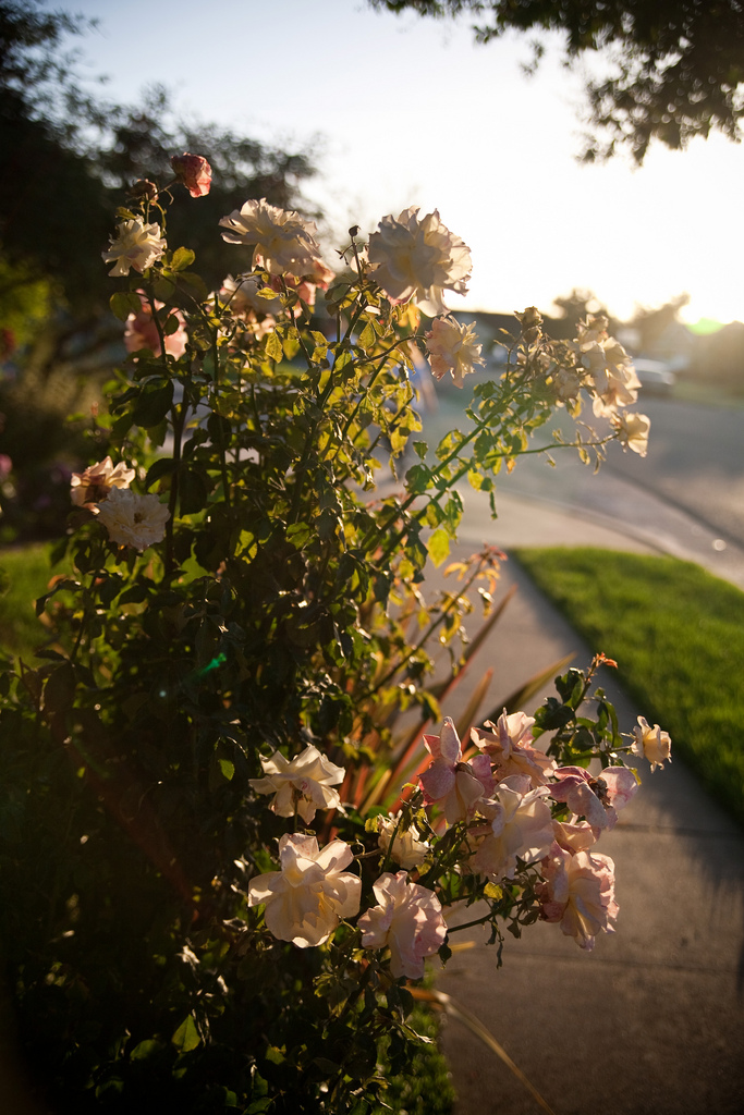 Ellingsen Photography Summer Evening Family Dog Walk Flowers