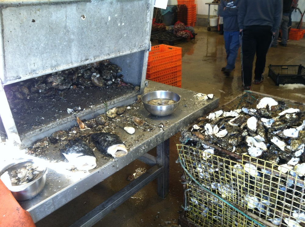 The shucking station at Hama Hama Oyster Company in Lilliwaup, WA.