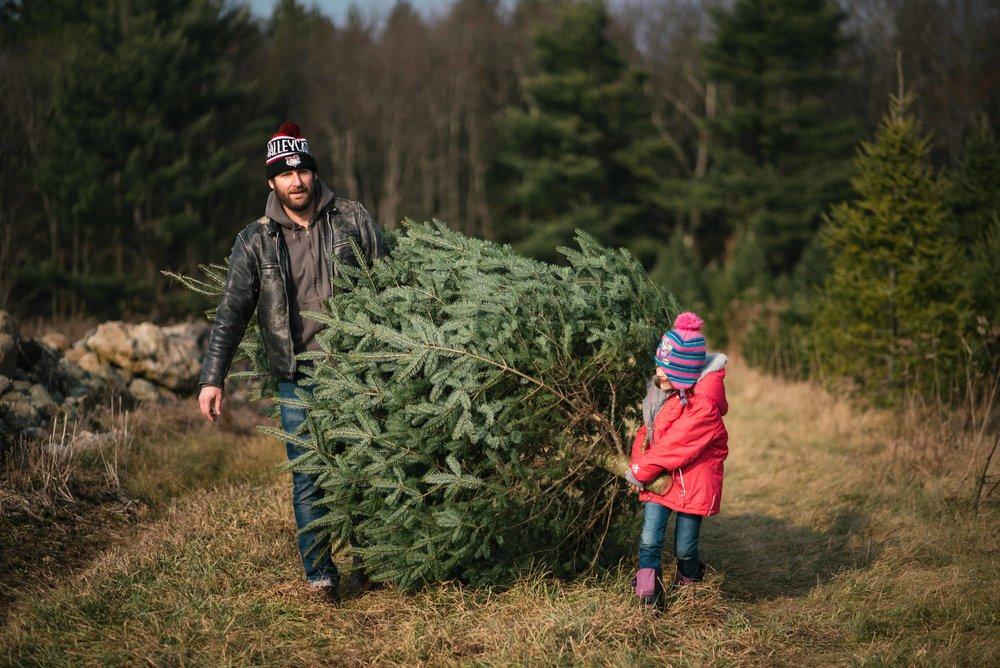TreeCutting2017-3654.jpg