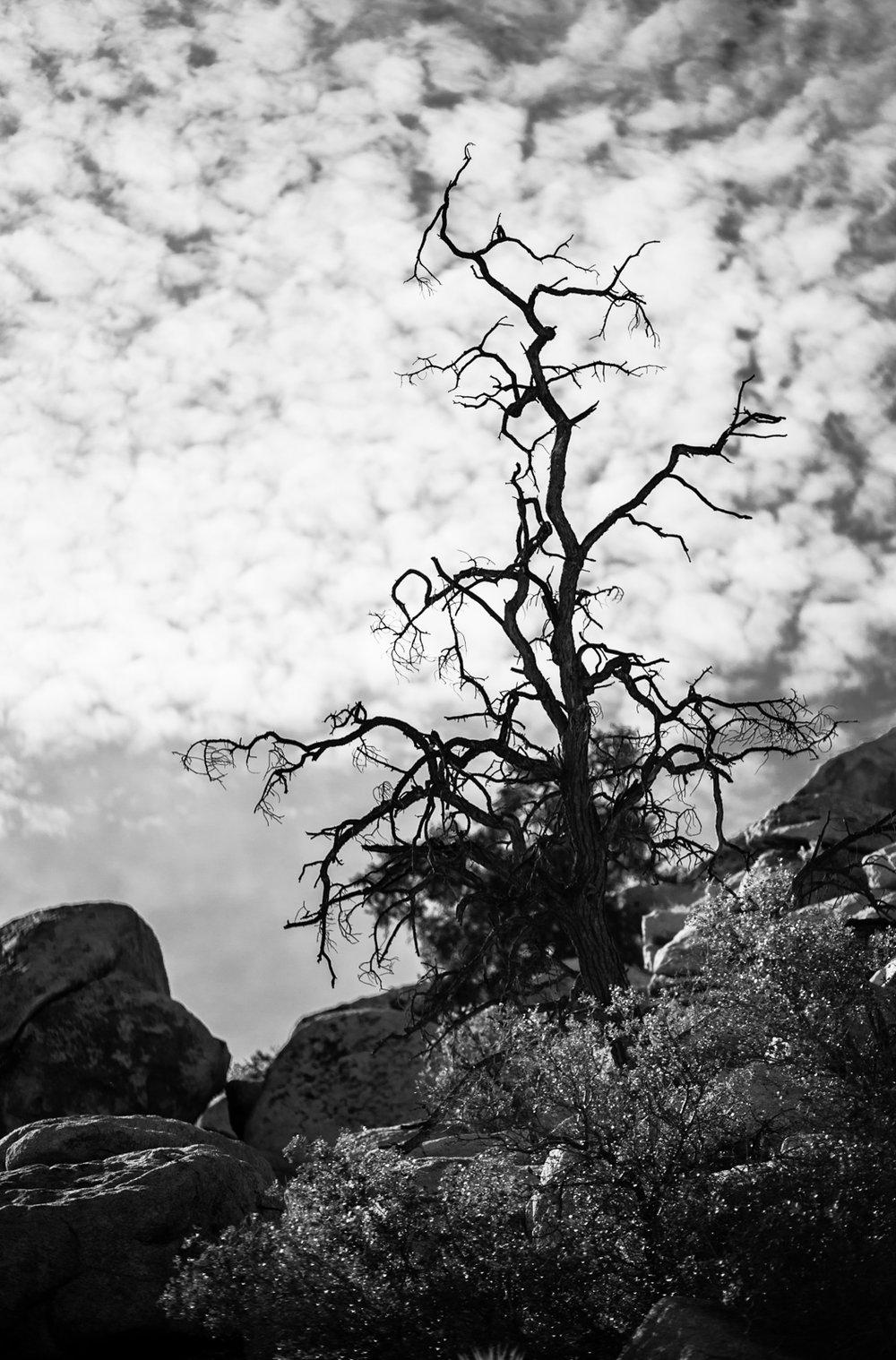 alexa_wright_joshua_tree-4.jpg