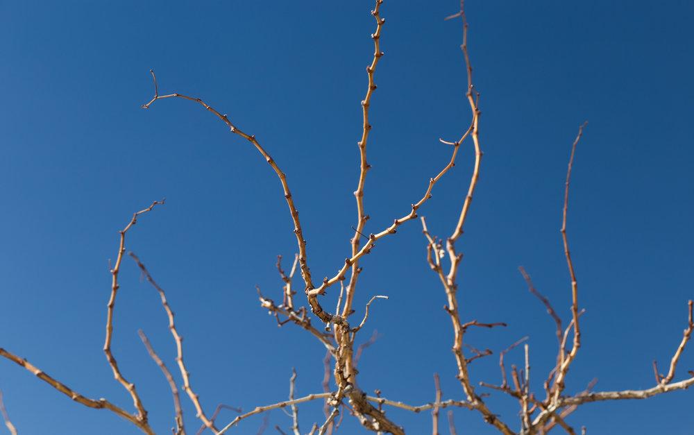alexa_wright_joshua_tree-14.jpg