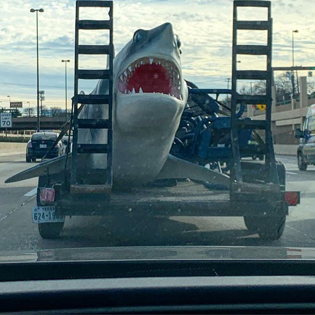 Barely survived an attack today from the elusive and dangerous trailer shark.