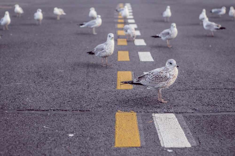 pigeons.jpg