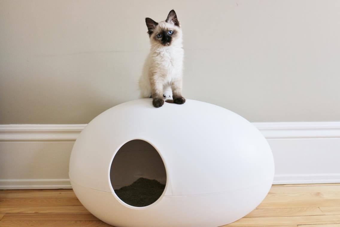 Cat Accessories for the Modern Minimalist