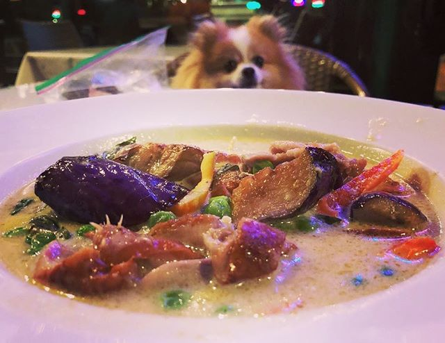 Green Curry Eggplant with Roasted Duck. We are also 🐶 friendly!