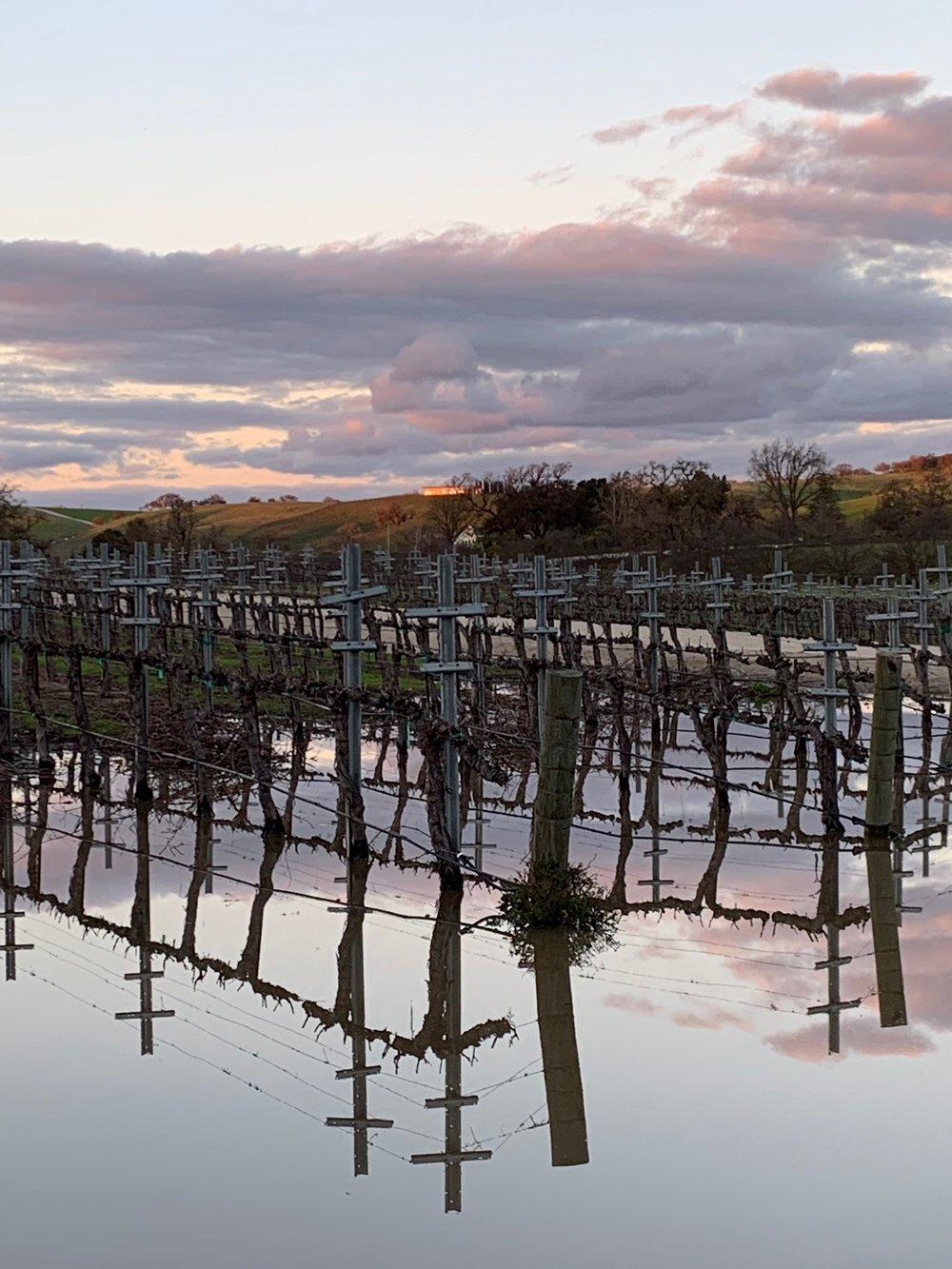 vines soaking in rain water.jpg