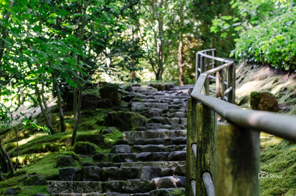 Japanese Garden-1.jpg
