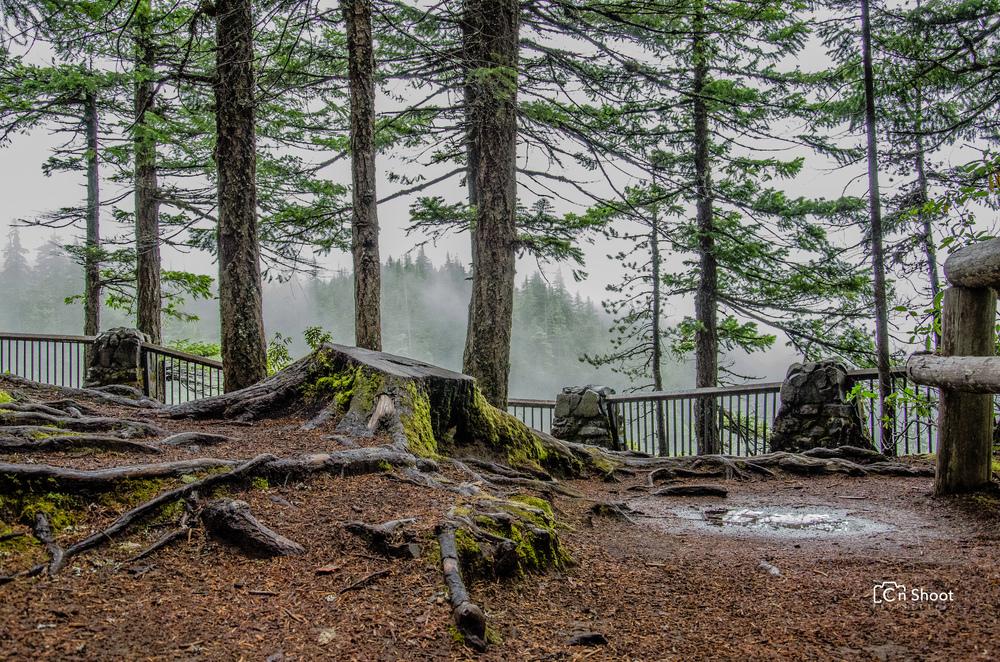 Salt Creek Falls -5.jpg