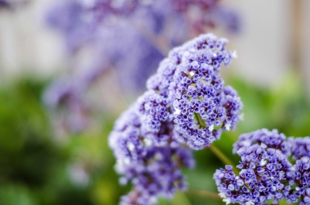 Purple Flower-1.jpg
