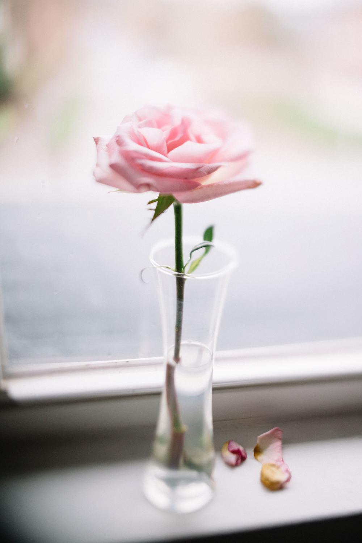 Jamie V. photography freelensed pink rose