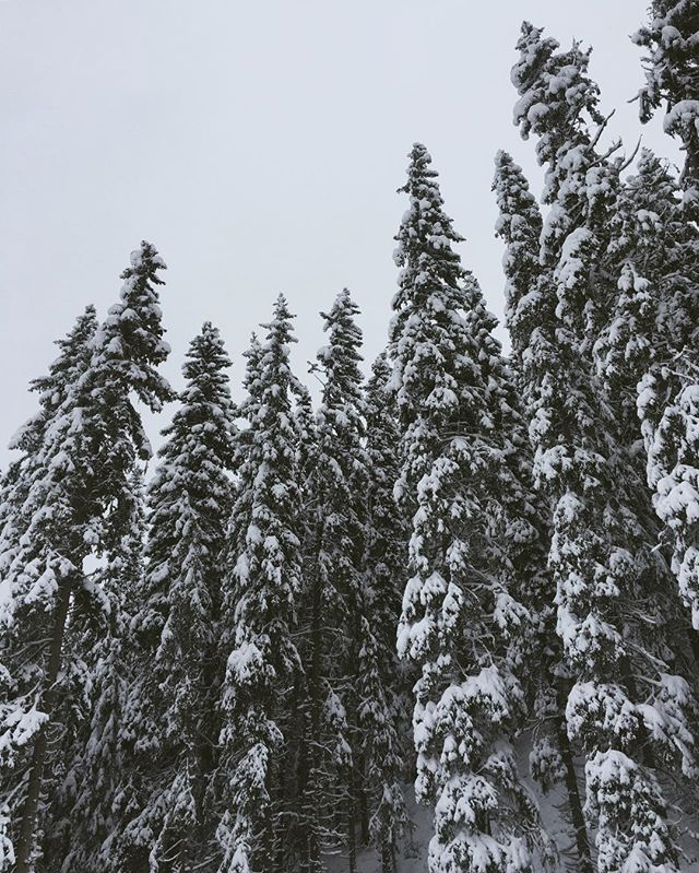 In my next life I'd like to be a tree, and sleep all winter under a heavy blanket of snow.