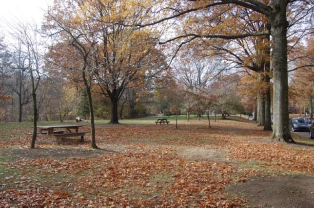 Parkland landscape along Reynolds Street
