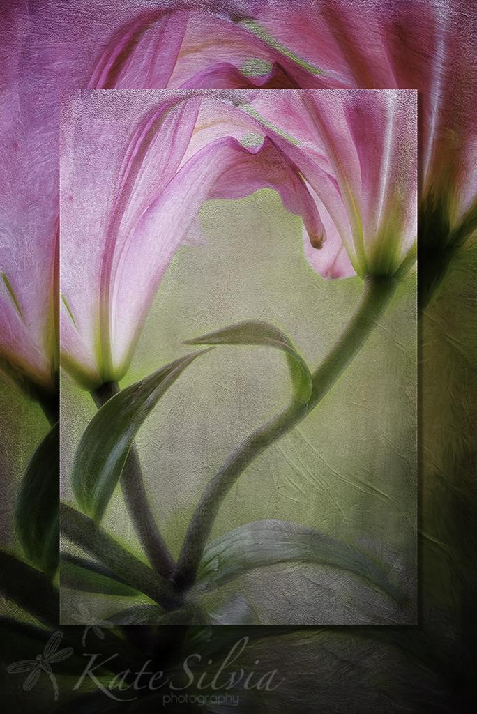 pinklilylayer