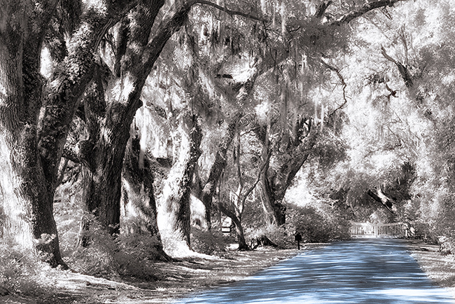 I-Ray used for a scene at Magnolia Plantation and Gardens, Charleston SC.