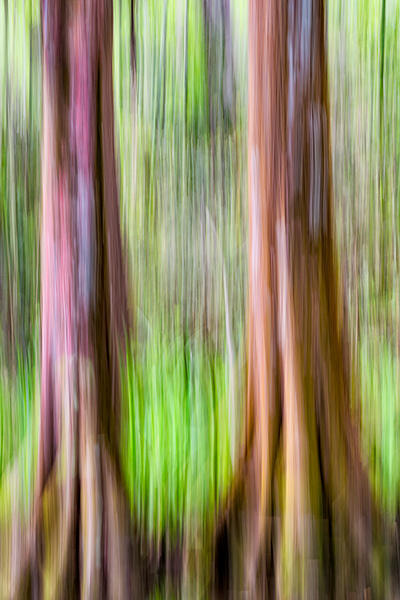 Magnolia 2017 Cypress Swipe.jpg
