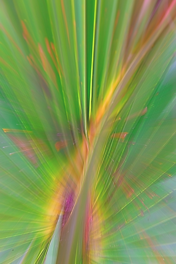 "I performed a ""Zoom Blur"" on this palmetto leaf because the wind was blowing it around too much to get a sharp image."