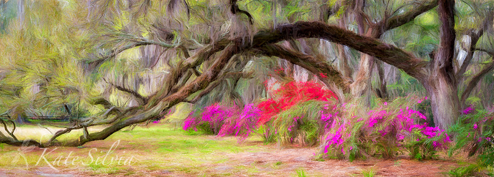 Magnolia Azalea and Live Oak Row Pano GG TopImpr Pastel1.jpg