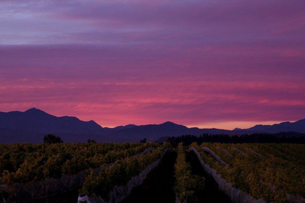 Vineyard 6 Sunset.jpg