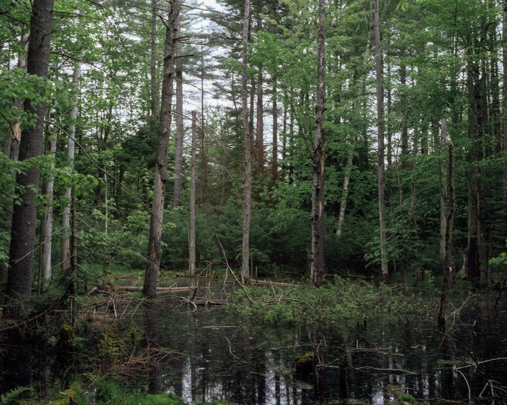 Swampscene.jpg