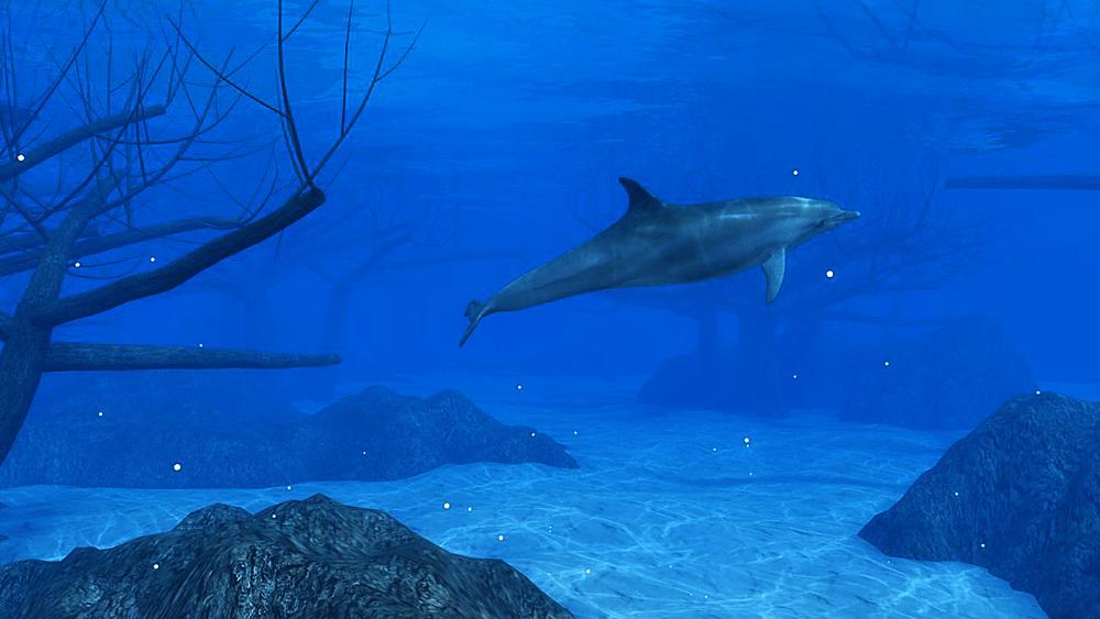 Sunken-forest---Dolphin-(non360)----27-07-2015.jpg