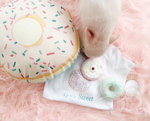 Live Sweet Shop-Donut Pillow
