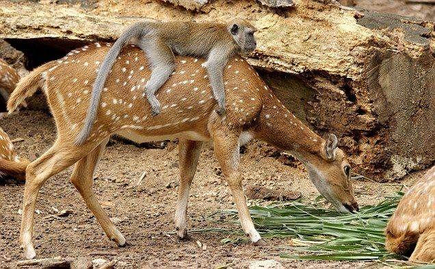 deer and monkey (Used).jpg