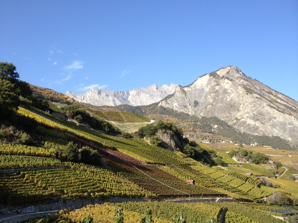 Saillon, Valais, Switzerland - this vineyard is Switzerland's smallest and is owned by the Dalai Lama