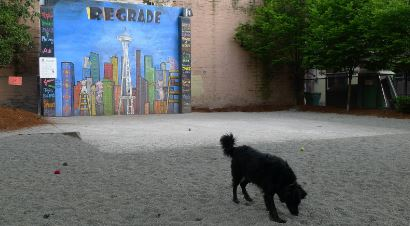 Regrade Park - Belltown off leash dog park
