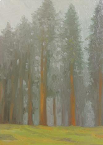 Redwood Fog: Monte Rio