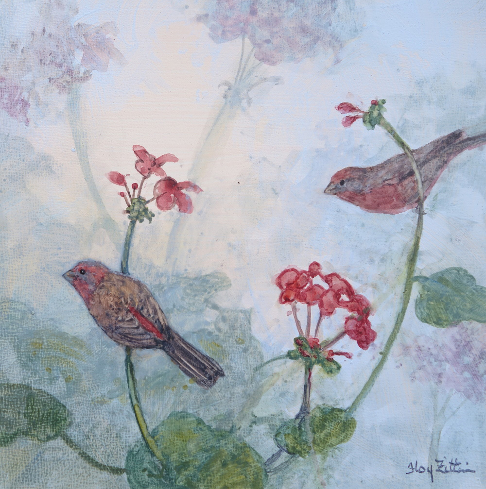 House Finch and Geraniums