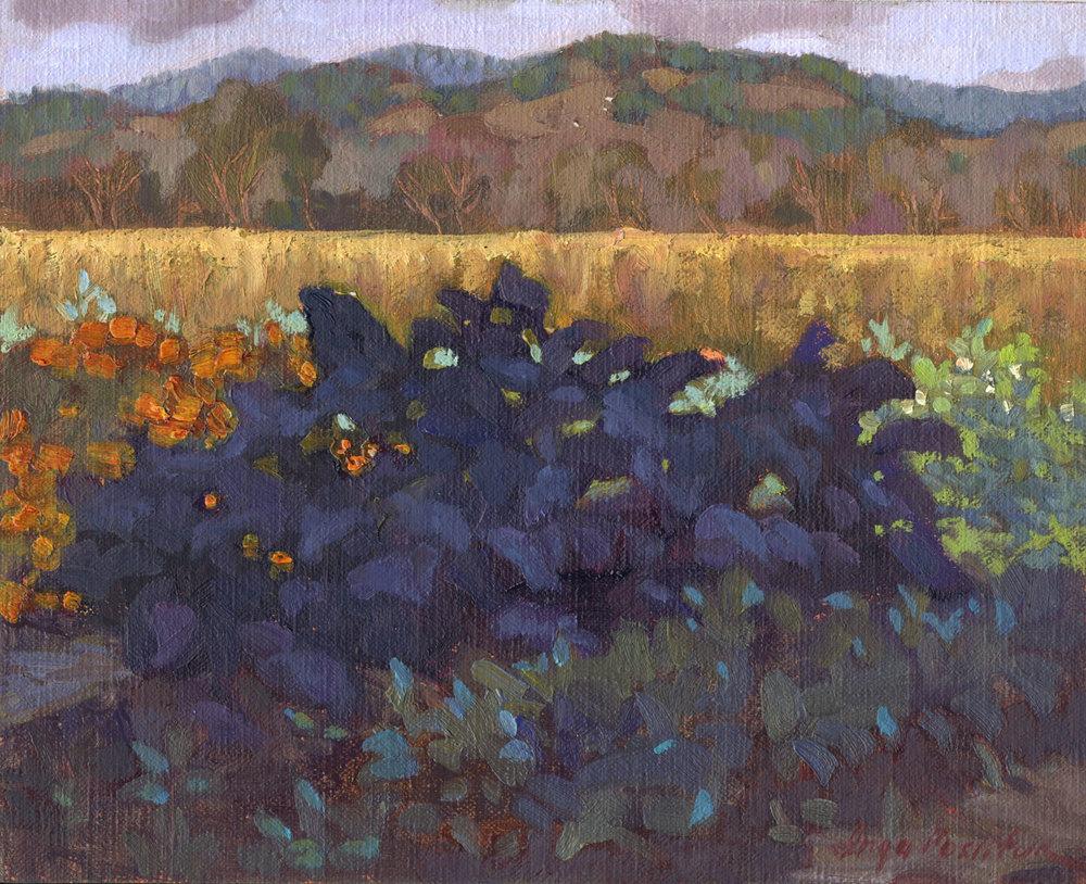 Napa Valley Kale