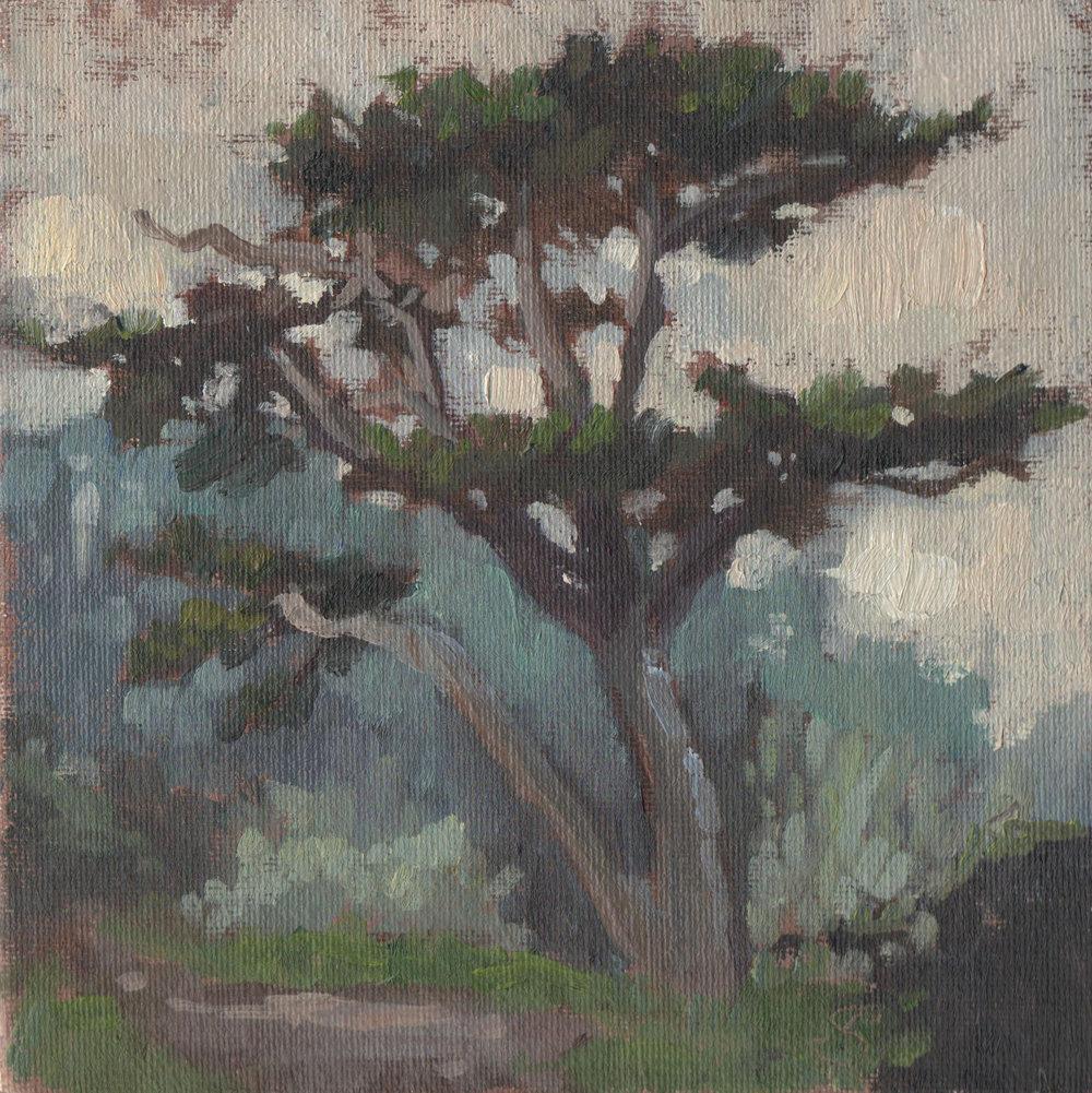 Cypress at Land's End