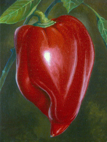 Ripe Bell Pepper
