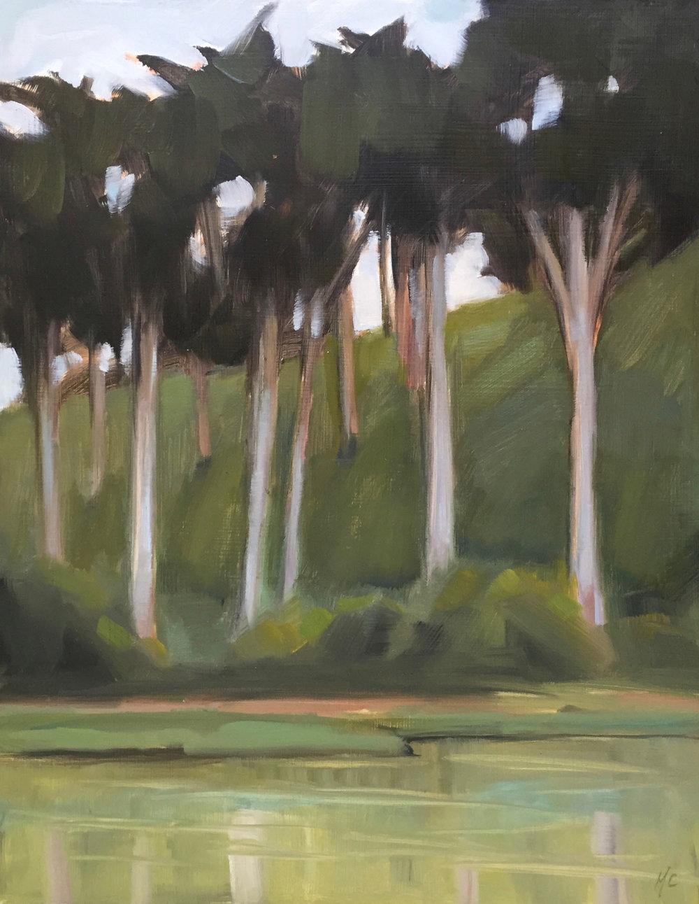 Stow Lake Cypress
