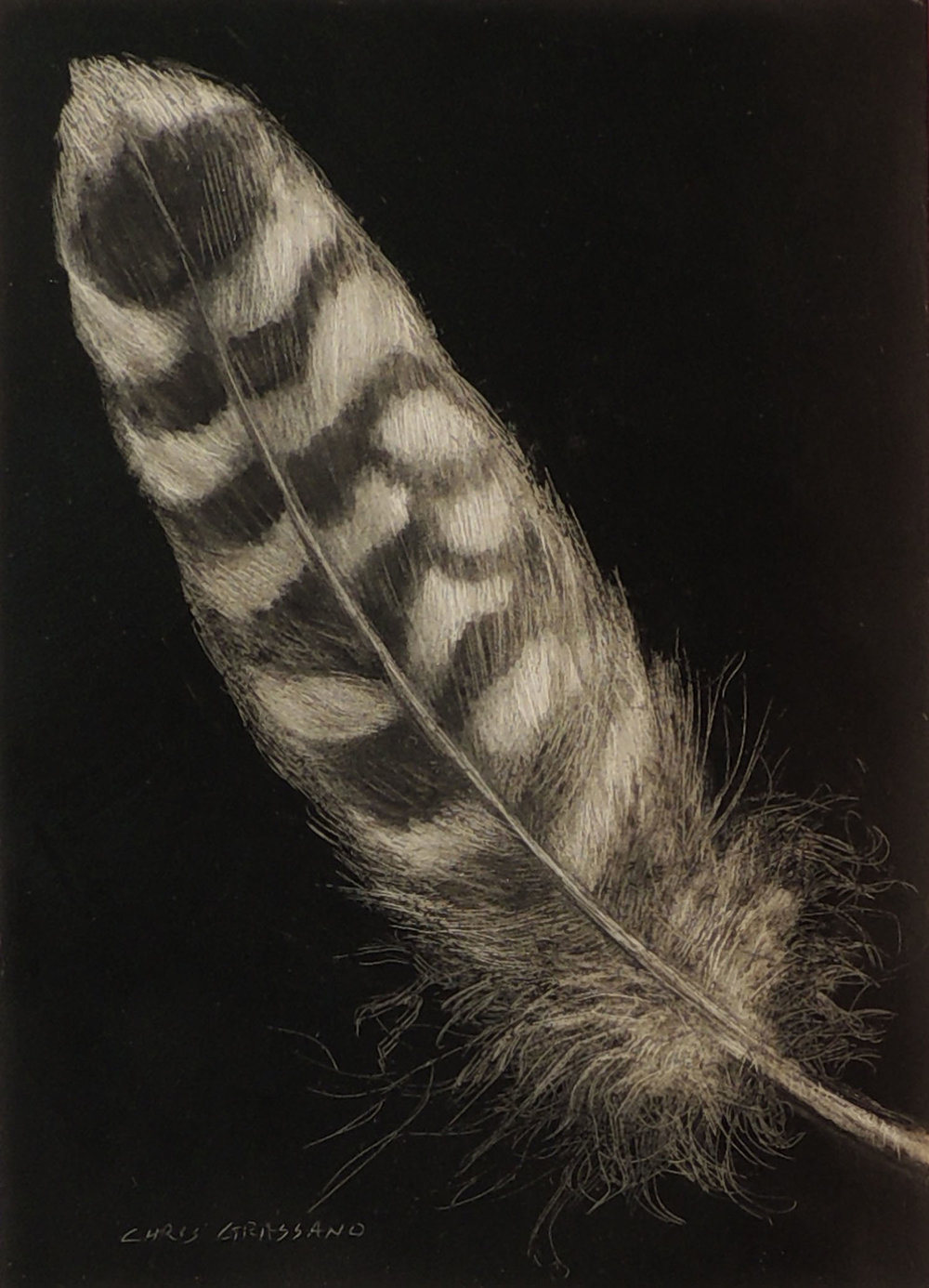 Raptor Feather