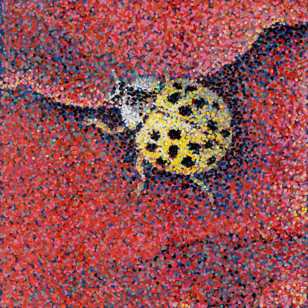 Ladybug Wishes