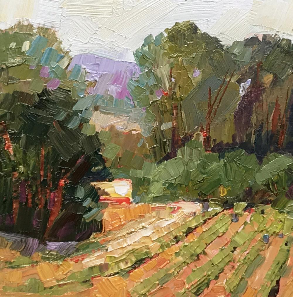 Farm Rows, Santa Inez