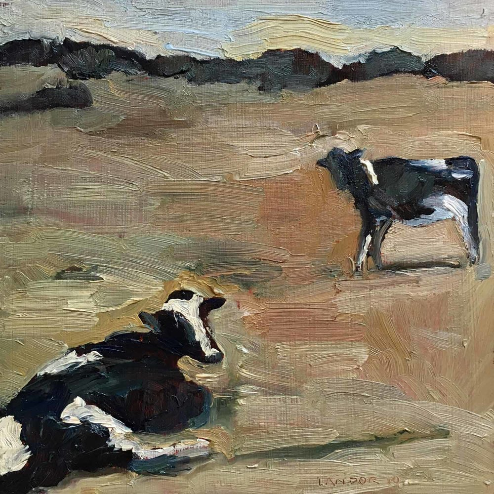 Cow Conversation