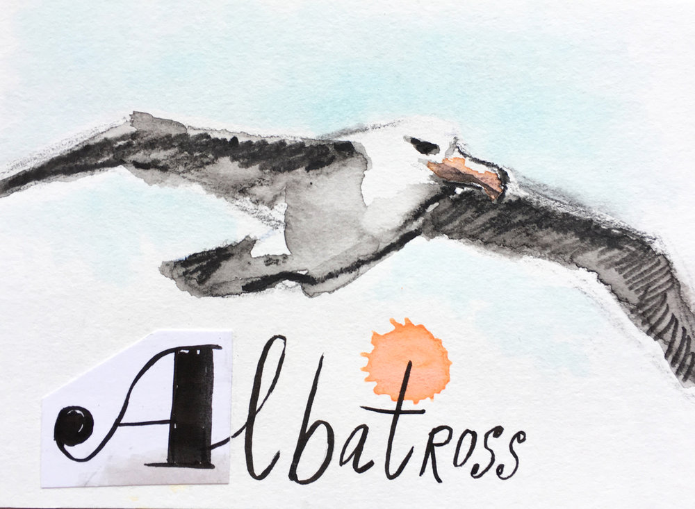 Flying Albatross