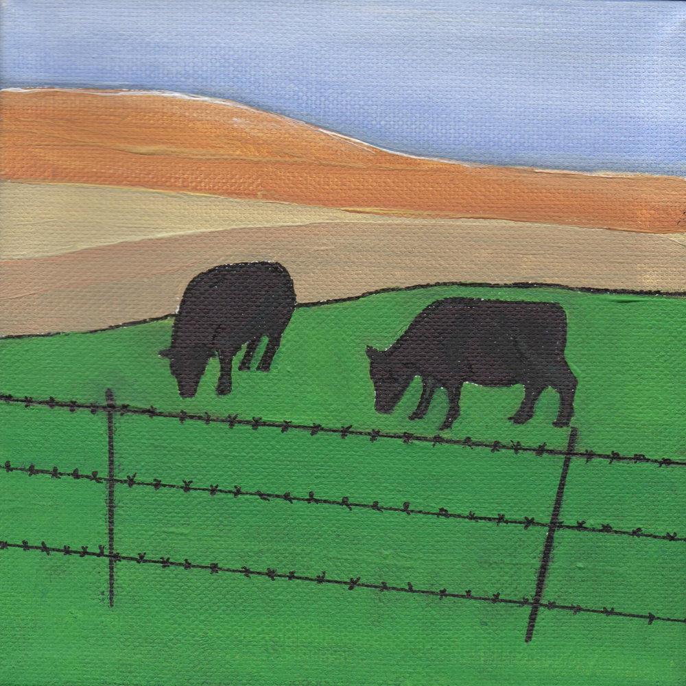Bodega Bay Cows