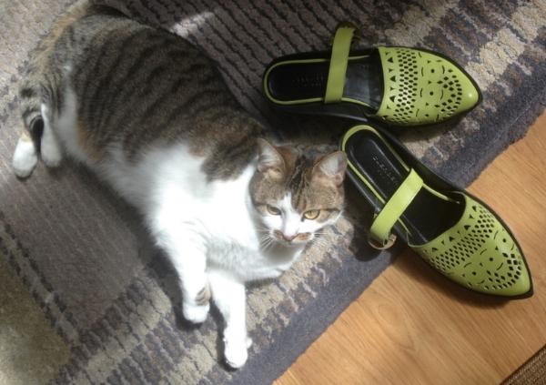 sgreenshoes.jpg