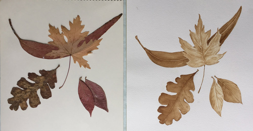 Planning your painting Left Image   Arrangement of actual leaves       Right Image  Finished painting with coffee.