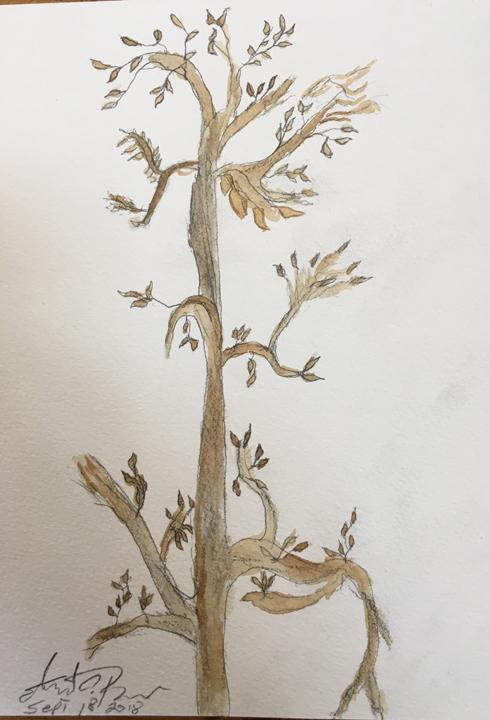 ed--tree.jpg