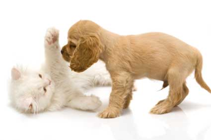 Puppies v. Kittens: the ancient conflict