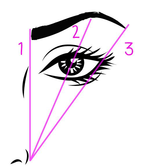 eyebrow-tips drawing