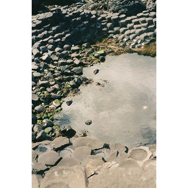 """""""Great things may be foreseen, but they cannot be known until they arrive."""" —GM  #35mm #nikonfm2 #portra400 #kodak #giantscauseway #northernireland #georgemacdonald"""