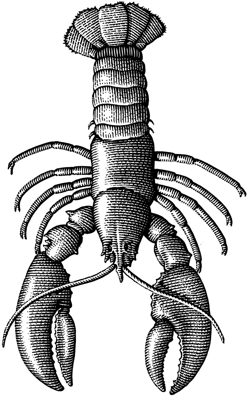 Clawed Lobster