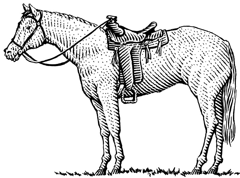 Horse and Western Saddle