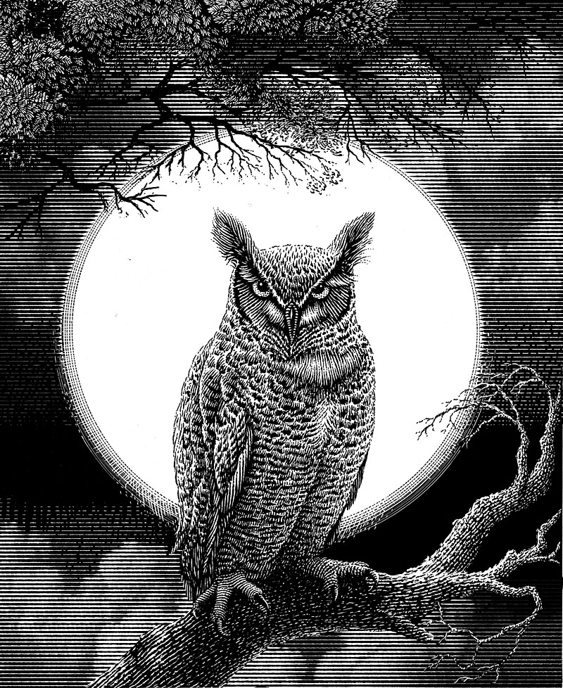 Screech Owl and Full Moon